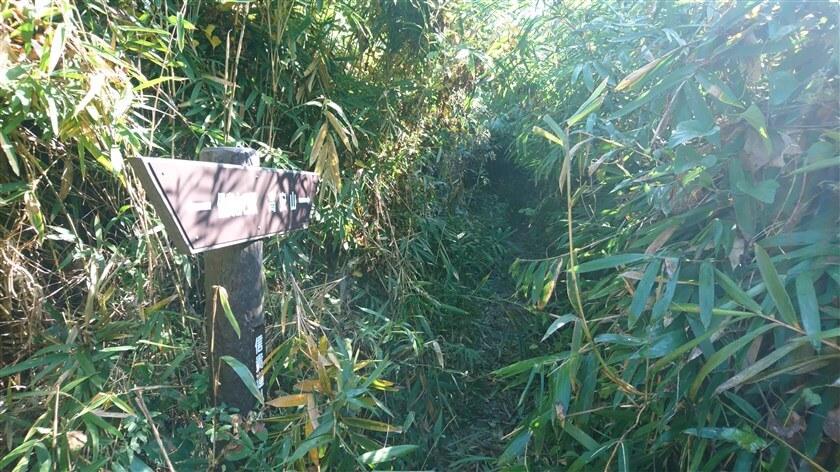 「信貴道ハイキング道」4本目の道標。この辺りから、藪漕ぎ(やぶこぎ)が始まる。