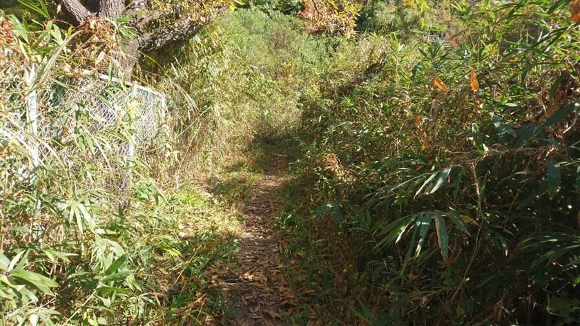 高安山霊園の横を通る、「信貴山のどか村」への道