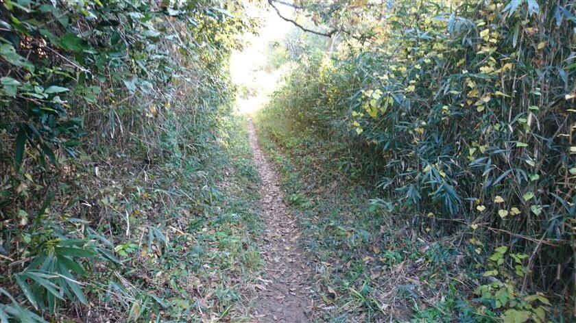 「信貴山のどか村」への道:歩く道は狭いが、左右の雑草が刈られて広くなっており、歩きやすい