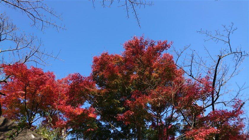 鮮やかな紅葉の下、ここで、昼食のお弁当を食べる
