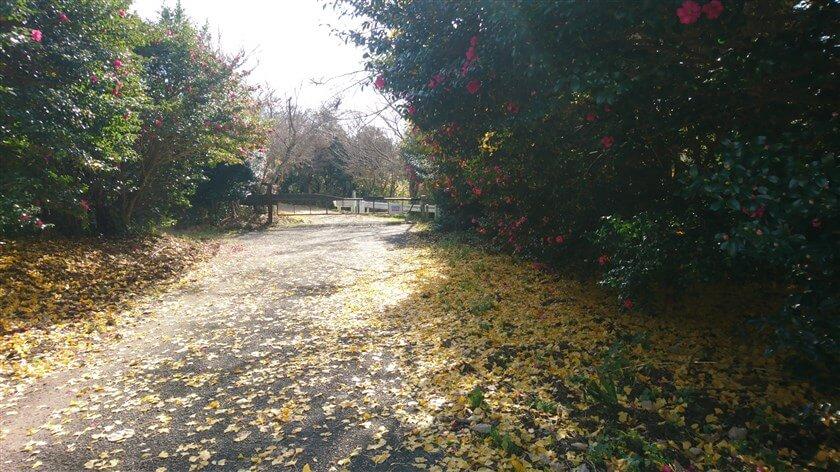 案内板にあったゲートに出る。ここで「近畿自然歩道:高安山から生駒山までの稜線コース」に合流。