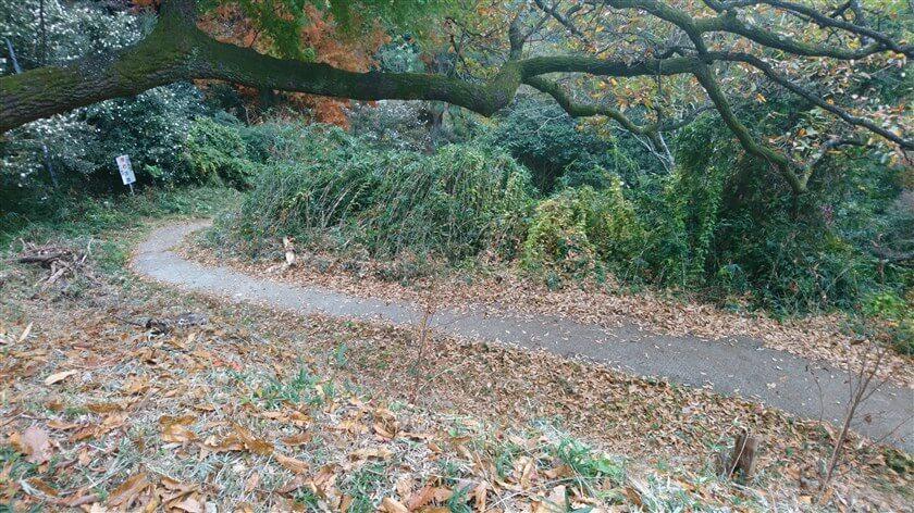 十三街道ハイキング道:道を竹箒で掃いてあり、落ち葉がきれいに取り除かれている
