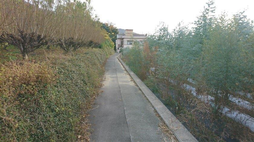 右にユーカリの木が、左は??の木の間の道を行く