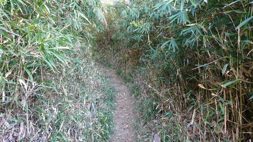 笹が刈られ、整備された道になっている