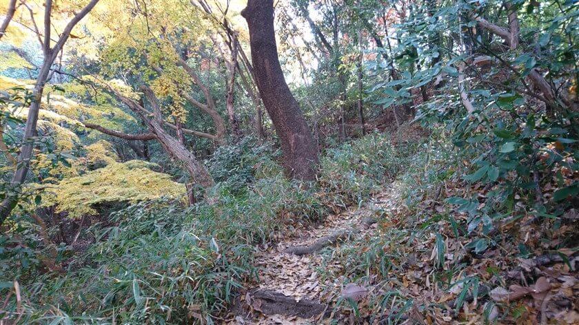 「おおみちハイキング道」は、左側が谷になっている箇所が多い