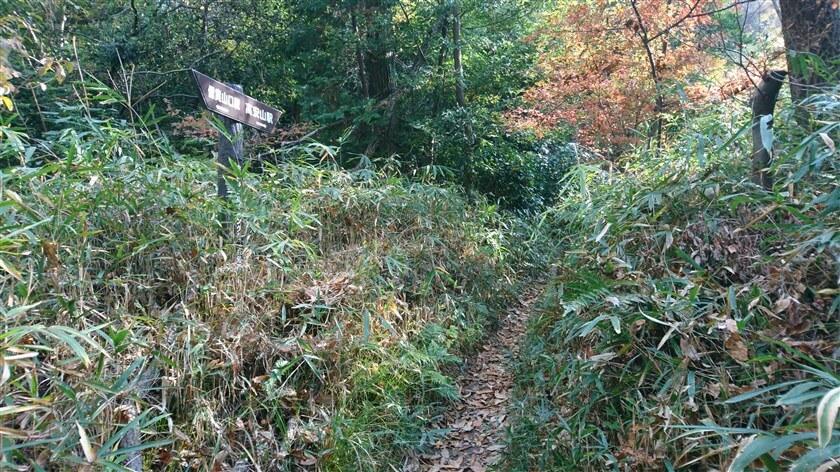 左に「おおみちハイキング道」(3本目)の道標。笹が刈られいている。