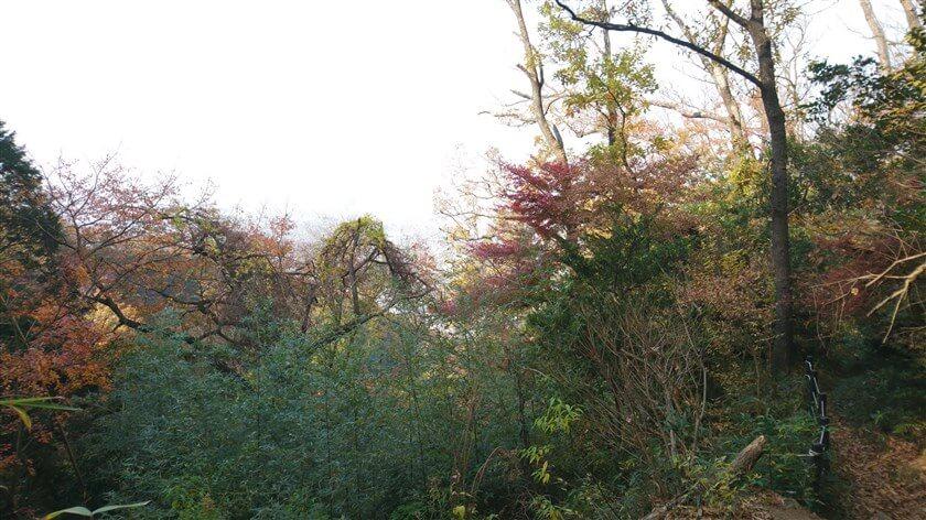 木々の配色が美しいが、下界は写っていない