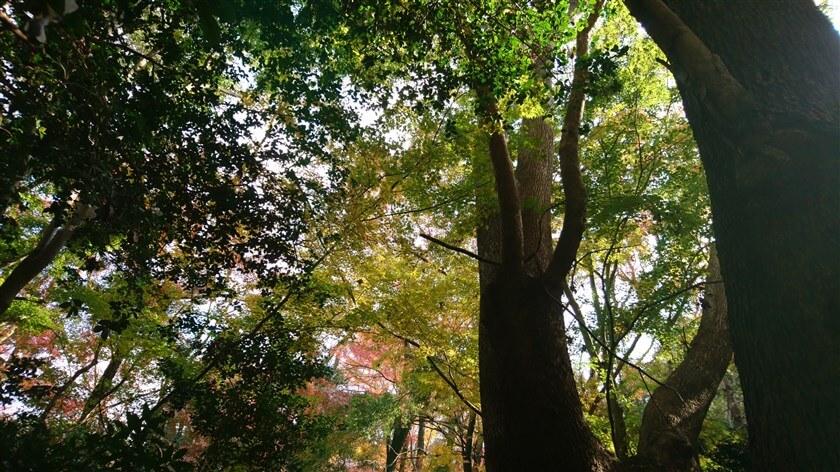 大木を見上げた様子