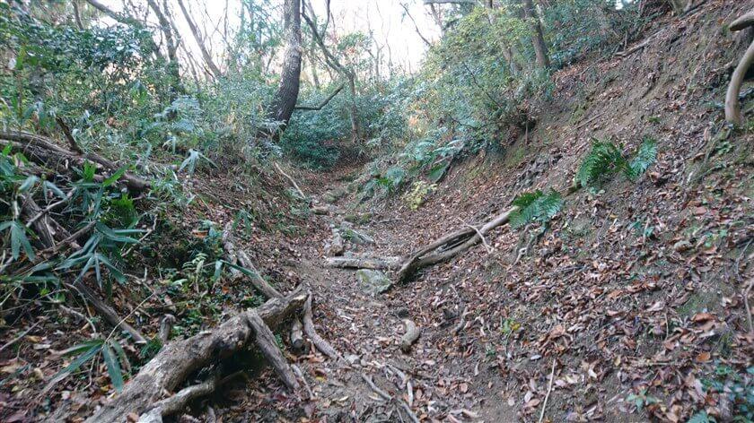 この辺りは、岩と倒木が混じって歩きにくい