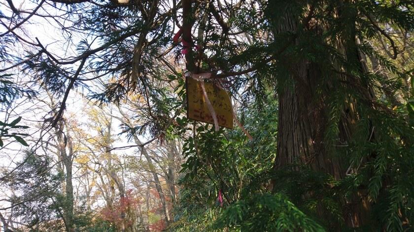 すると、木の枝に「おおみちへのショートカットコース ごじゅうから」と書かれた板が吊るされている