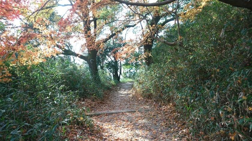 道は広く、よく手入れがなされているので歩きやすい