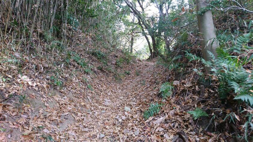 恩智新道よりは、山道を愉しめる