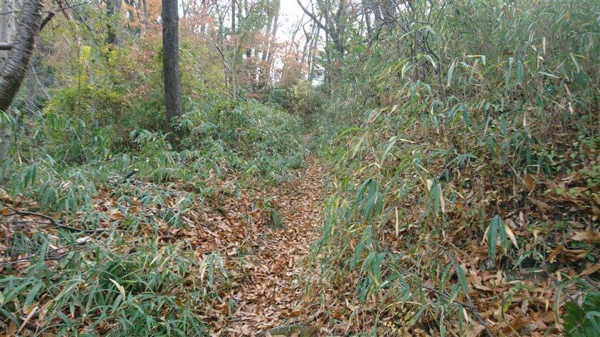 藪に入るも、笹が刈られている