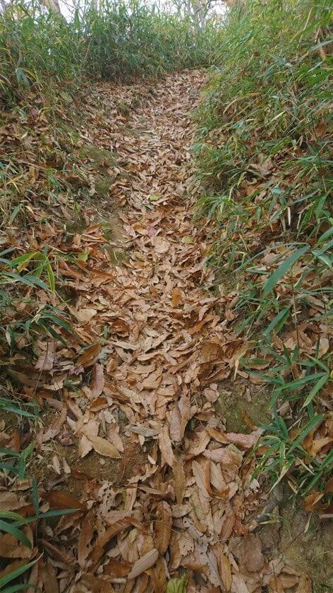 落ち葉が幾重にも重なっており、滑る