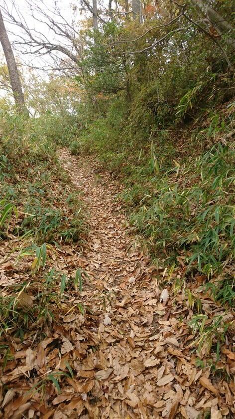 落ち葉の道が続く