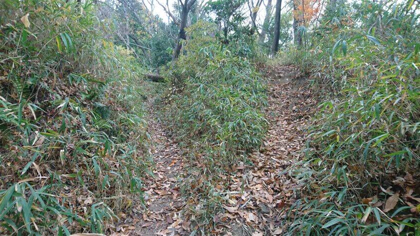 倒木が前をふさいでいるが、右に、これを回避する道が作られている