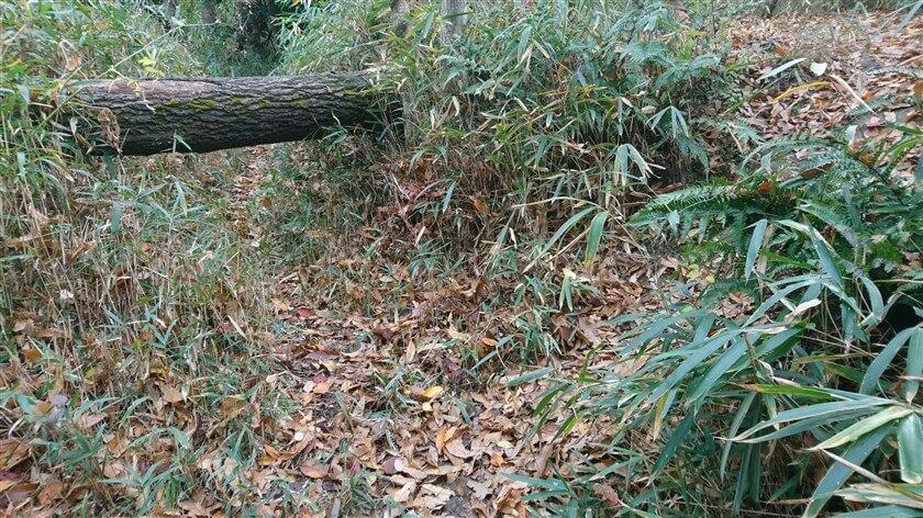 倒木は、潜れる