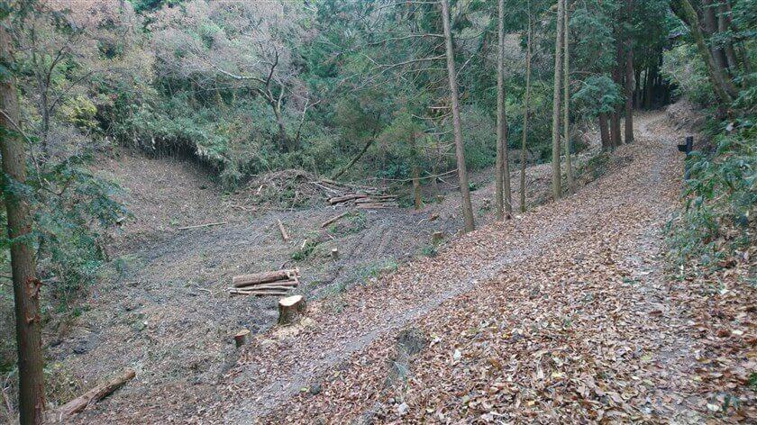 合流地点左の、雑木林が開拓されている