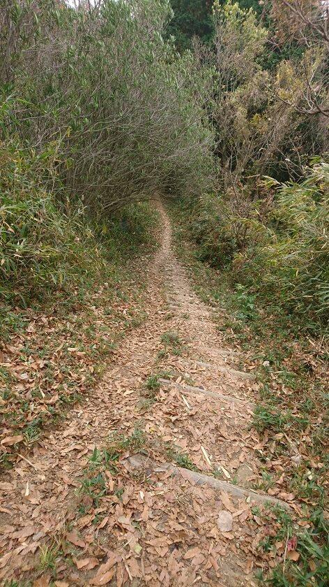 生駒縦走歩道を南に歩き、展望台を過ぎると急な階段になった下りになる