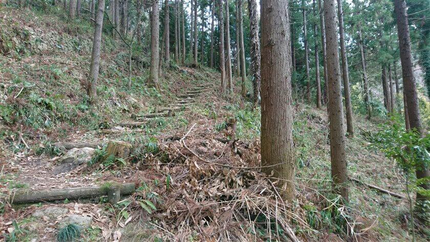 杉林の中に、階段が作ってある