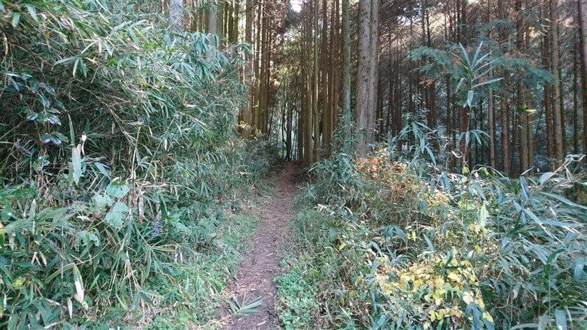 やがて、杉林になる