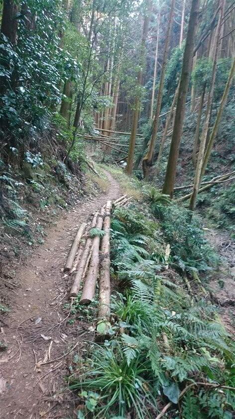 倒木の杉の木を路肩に並べ、歩道が補強されている