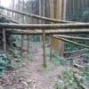 杉の倒木が多数あるが、このように柱で持ち上げられており、通行が容易になっている