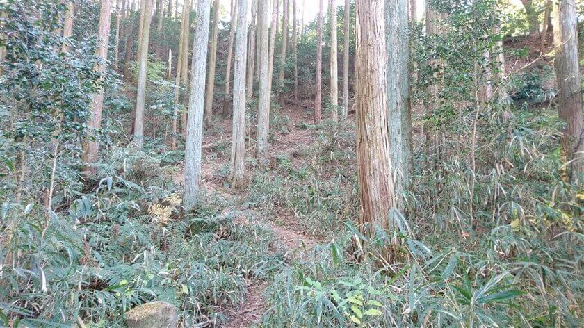やがて、間伐された杉林になる