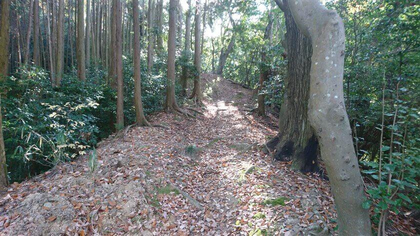 杉林を抜けると、尾根伝いの道になる