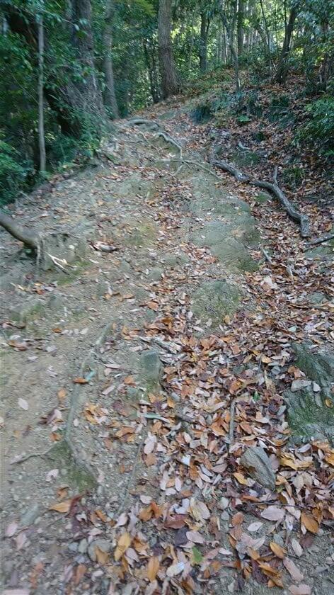 道は、岩の上を歩く状態に変わる