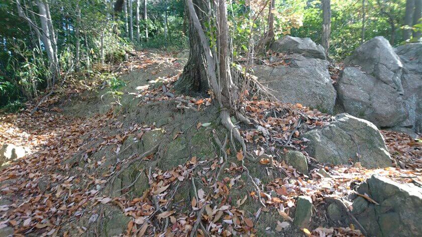 大きな岩がむき出しになっている、岩場がある