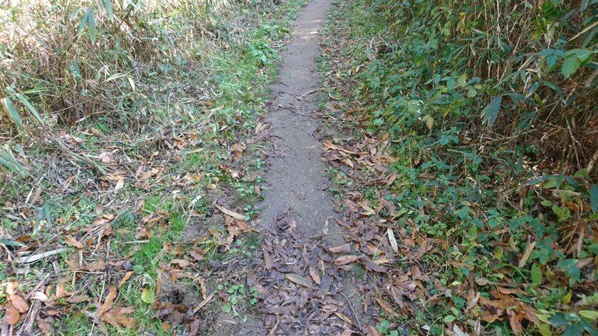 左右の雑草が刈られ、道が広くなっている