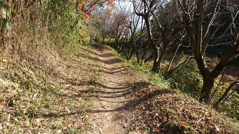 日当たりが良いところは乾いていて、気持ちよく歩ける