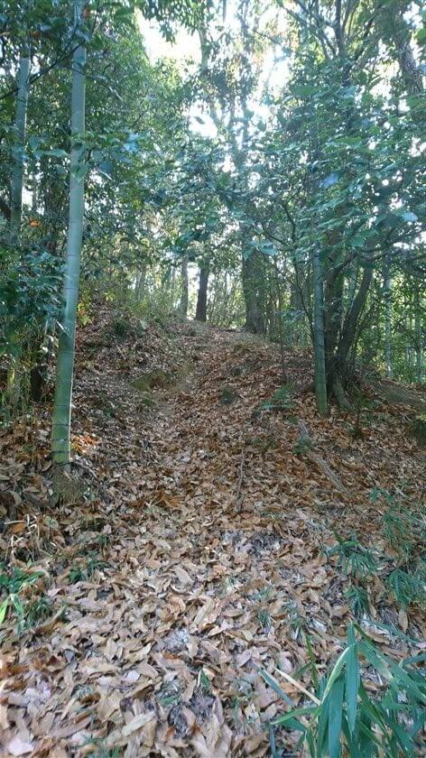 登り始めは、落ち葉で道があるようには見えない