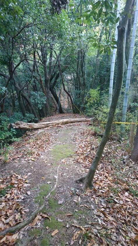 狭い尾根道の「鞍部」に、倒木がある