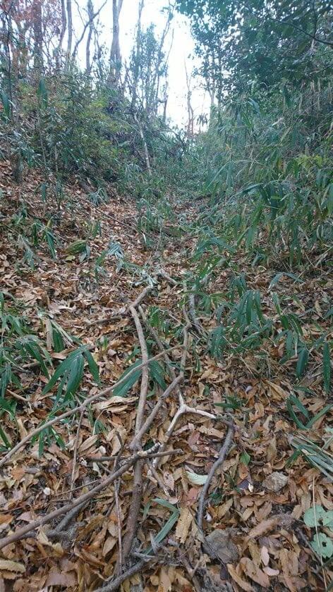 笹と枯れ木と落葉の道を行く