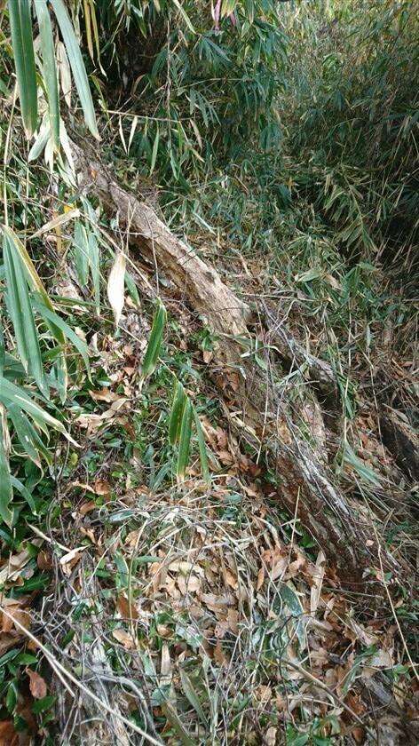藪漕ぎの中に倒木があり、道が分かりにくいため、右に足を踏み外しそうになる