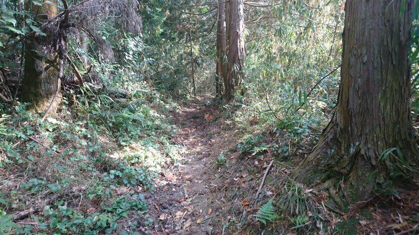 杉林の道になり、道の様子が一変する