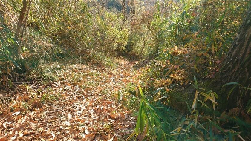 下り始めの様子。落ち葉が幾重にも積もっているが、道はしっかり認識できる。