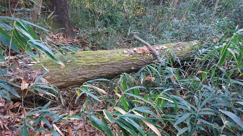 大きな倒木があり、やっとの思いで乗り越える