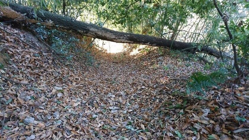 倒木の向こうが、明るく開けている