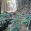 小さい谷川の横の道には、無数の竹が倒れている