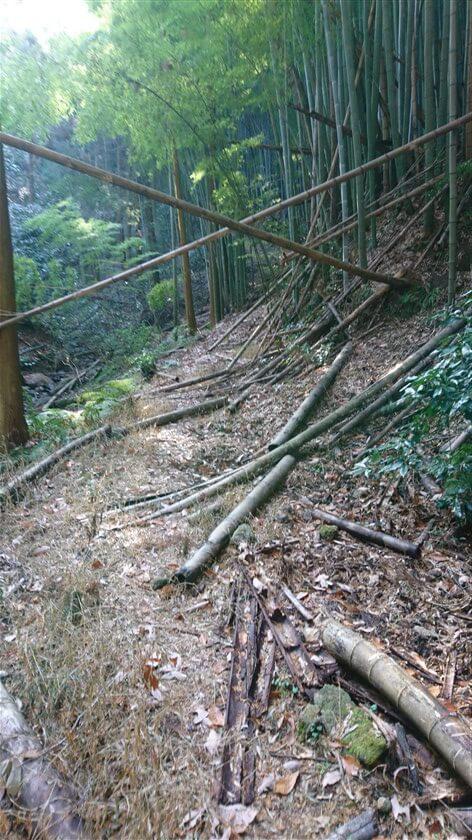 竹が倒れた道が続く
