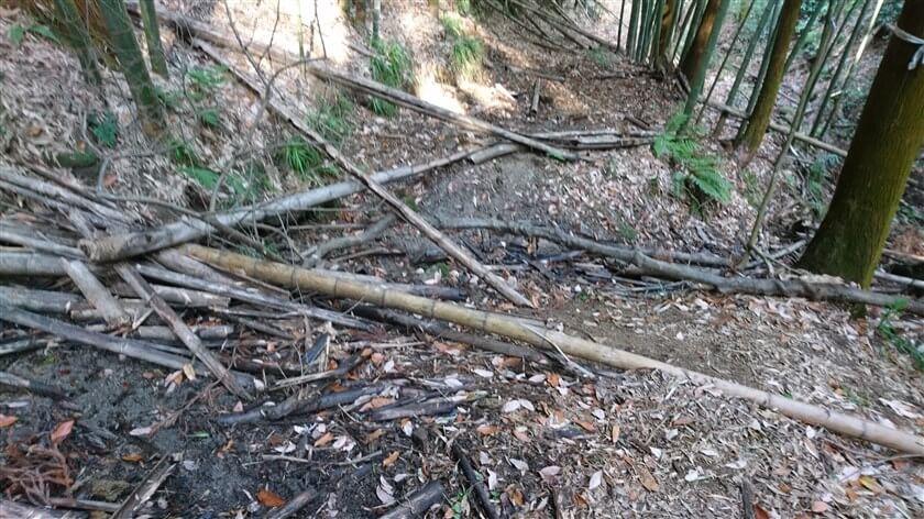 倒れた竹が散乱した、ぬかるみの道