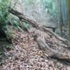 渓流沿いの狭い滑り落ちそうな道に倒木があり、行く手を阻む
