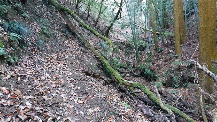 跨ぐことも潜ることもままならない倒木があり、困難を極める