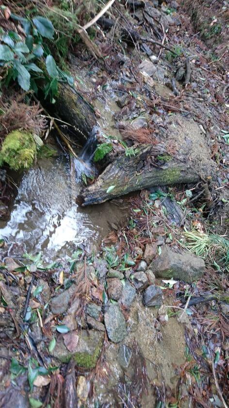 谷川の水量は多くない