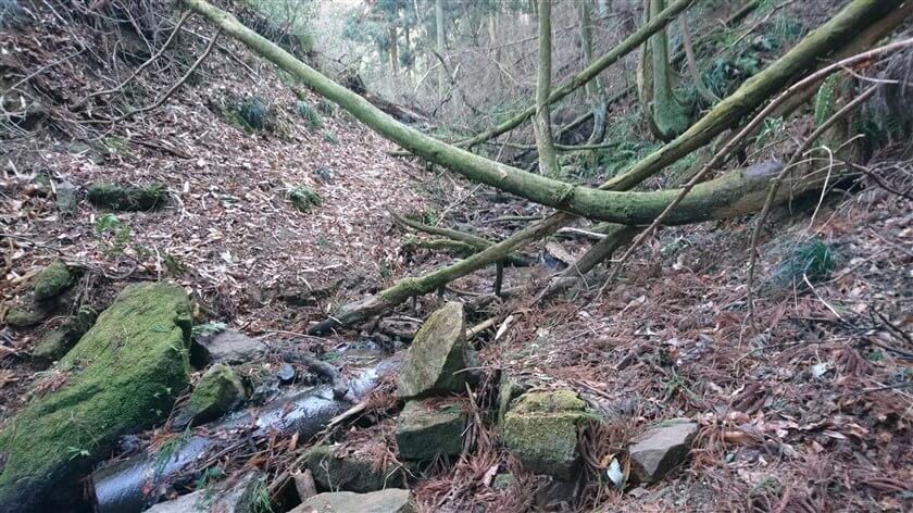 右側から多数の木が倒れており、道が左に変わる