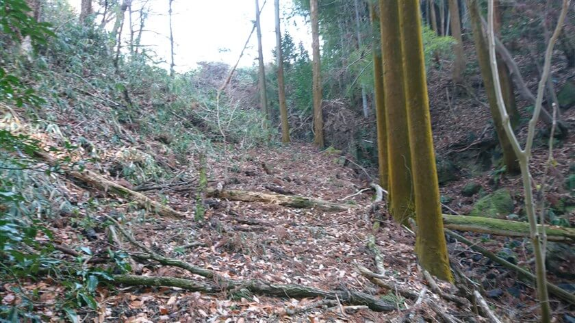 多くの倒木が放置された、谷川沿いの道に戻る