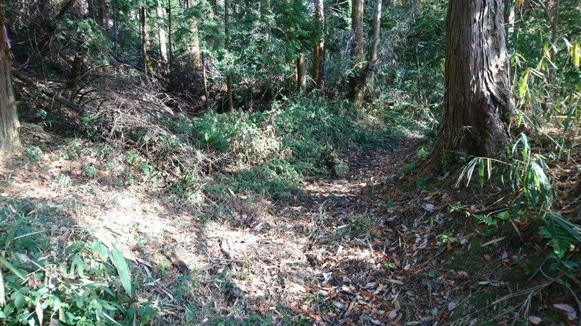 「尾根道」と合流した、杉林の道